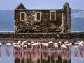 flamingos-bodrum