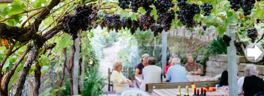 Traubenreben in der Küchelberg Hütte