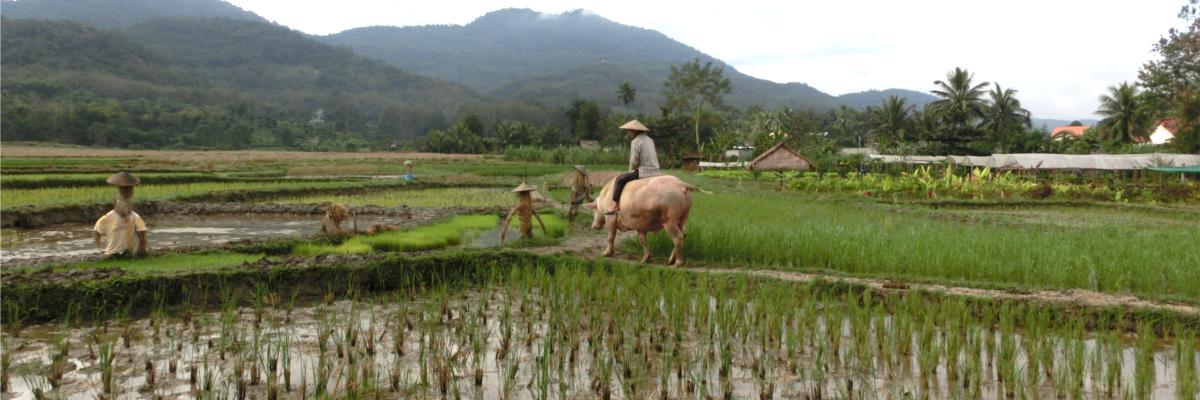 Überblick über das Reisfeld