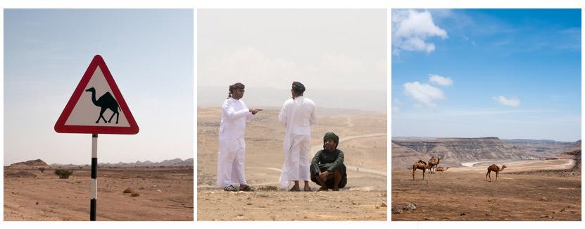 Kamele in den Bergen von Salalah