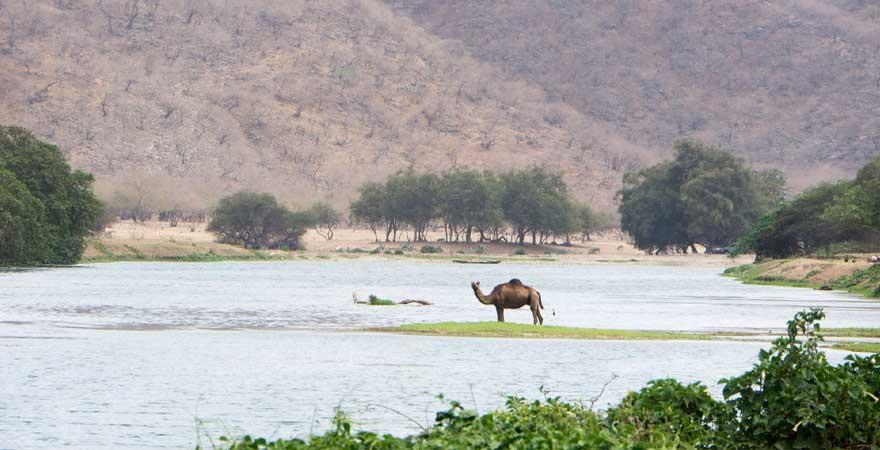 Wadi Derbat in Salalah