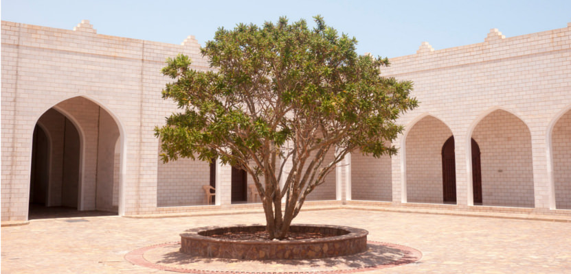 Weihrauch im Oman