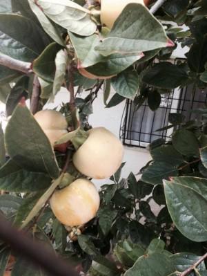 Schon auf dem Transfer sehen wir: saftige Obstbäume wohin man nur guckt...