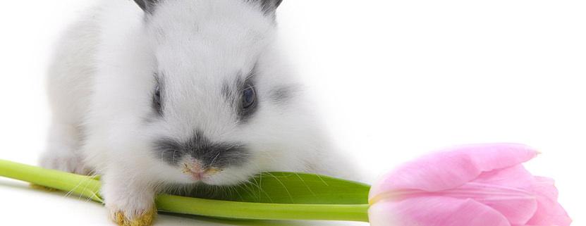 FTI Touristik wünscht Frohe Ostern