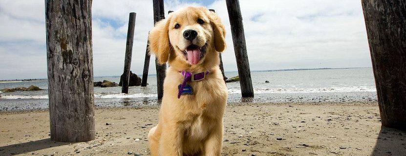 In den Urlaub mit Hund