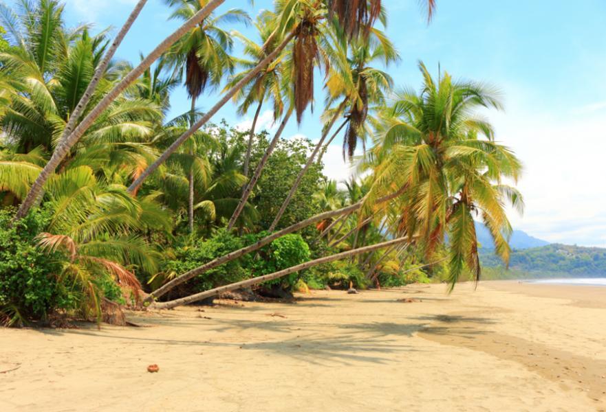 Strand, Palmen und Meer in Costa Rica