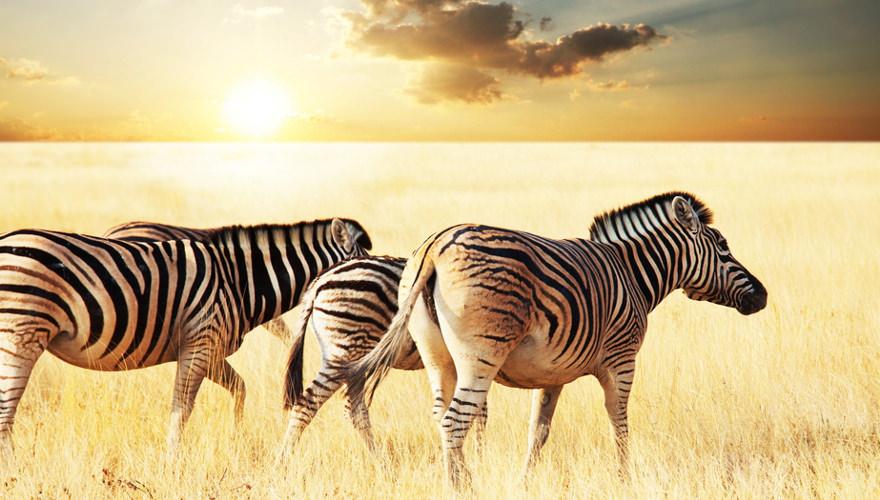 Erleben Sie Afrikas Tierwelt