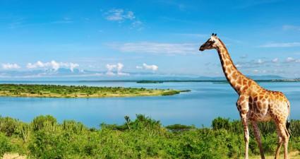 Afrikas Vielfalt an Tierarten und Natur