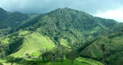 Kaffeeplantage in Kolumbien