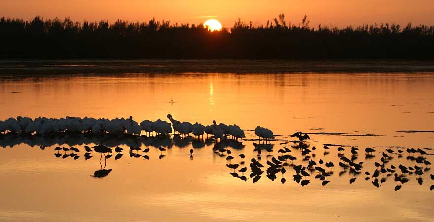 Sonnenuntergang Sanibel Island