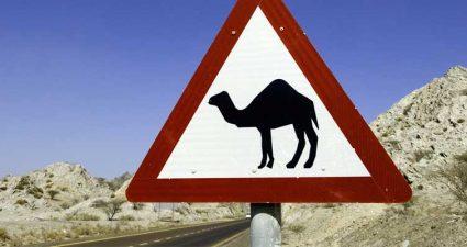 Straßenschild in den Vae mit einem Kamel