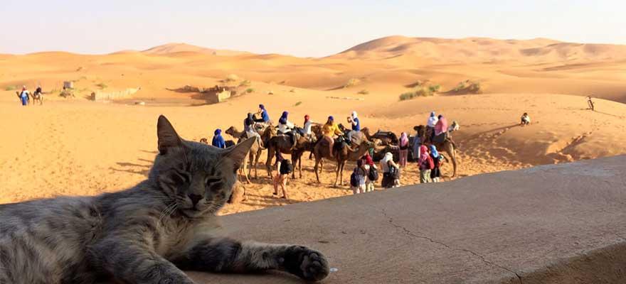 Sahara bei Agadir