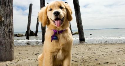Ein glücklicher Hund im Urlaub