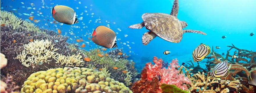 Inselstaat Fidschi