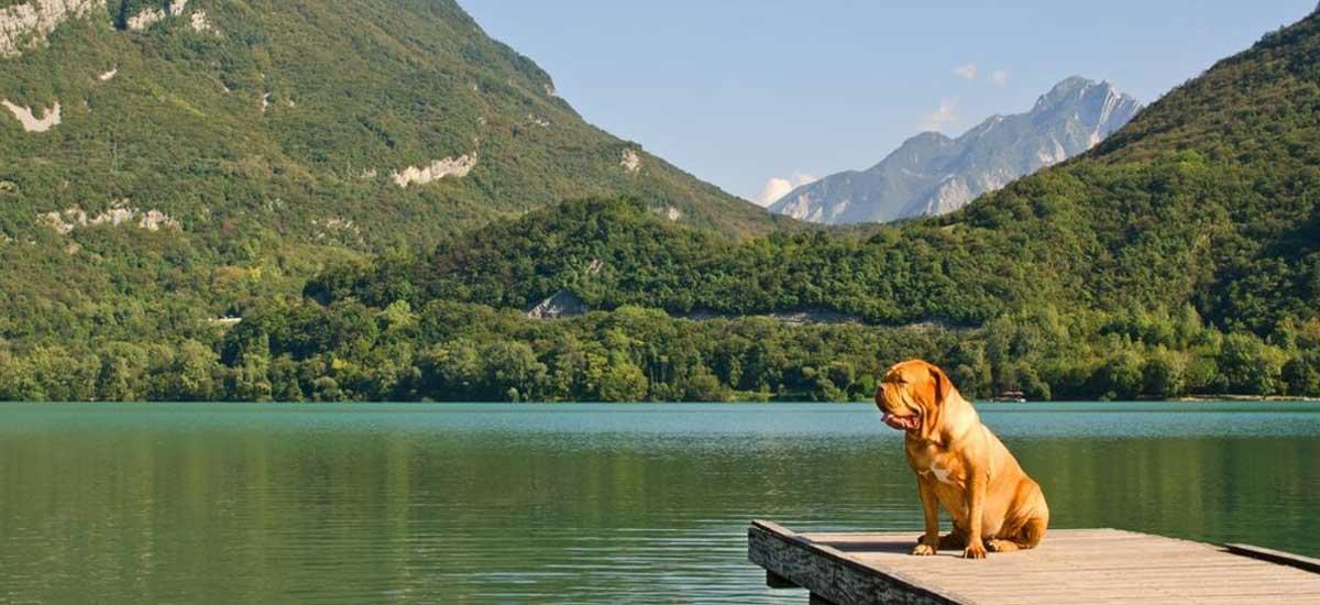 Hund sitzt an einem See in Österreich