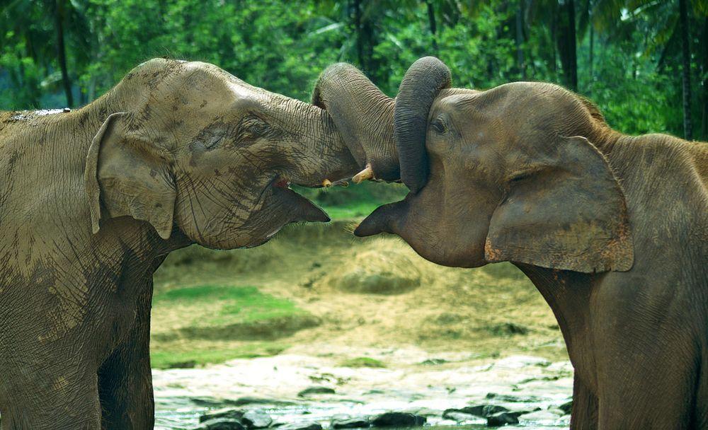 Urlaub Sri Lanka Asien