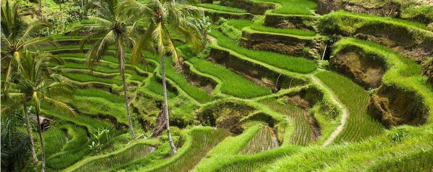 Reisefeld Bali