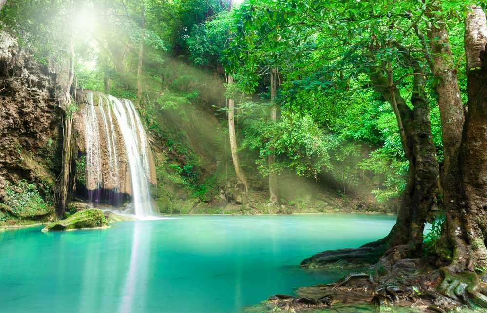 Urlaub Thailand Regenwald