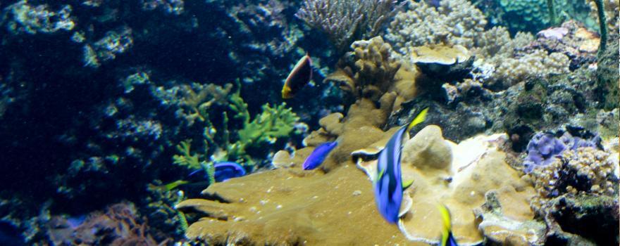 Aquarium Berli