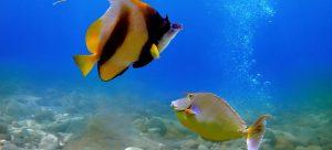 El Gouna Unterwasserwelt