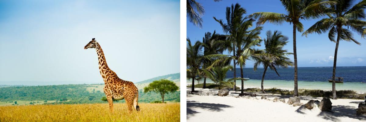 Flitterwochen in Kenia