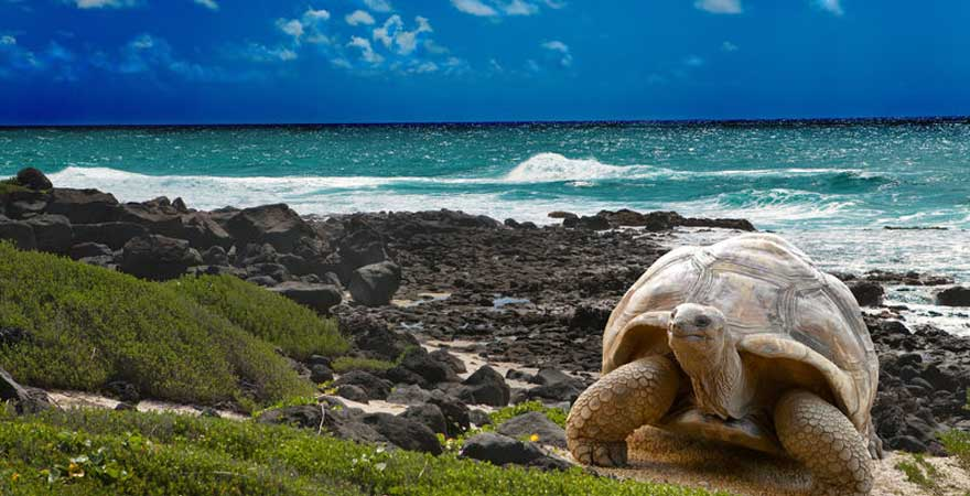 riesenschildkroete auf den seychellen