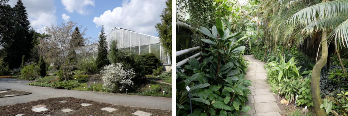 Dresden: Botanischer Garten