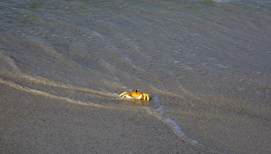 Krebs im Meer