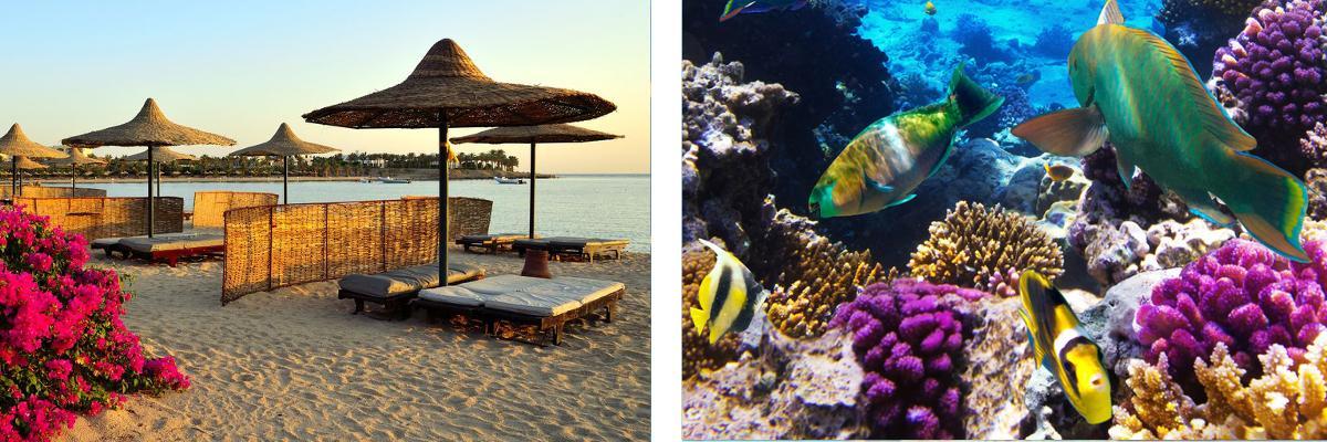 Marsa Alam und Elphinstone Riff
