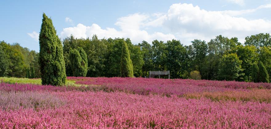 Heidefläche in Lüneburger Heide