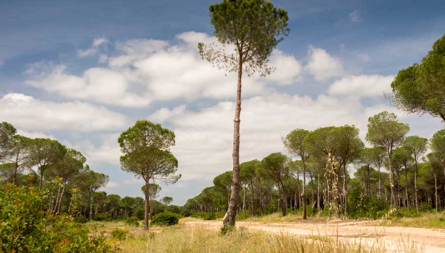 Donana Nationalpark in Andalusien
