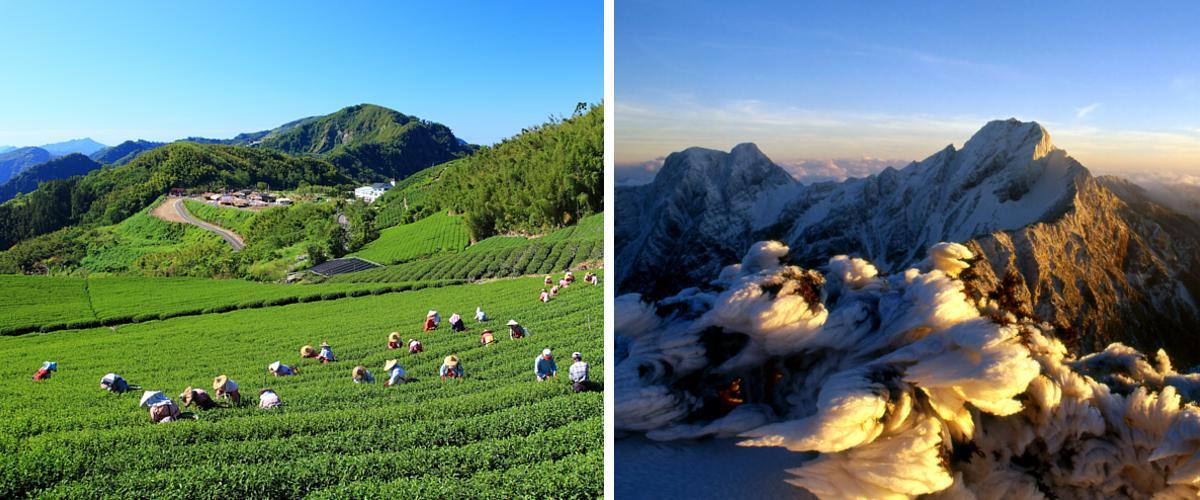 Teeplantagen Alishan und der Gipfel Yushan