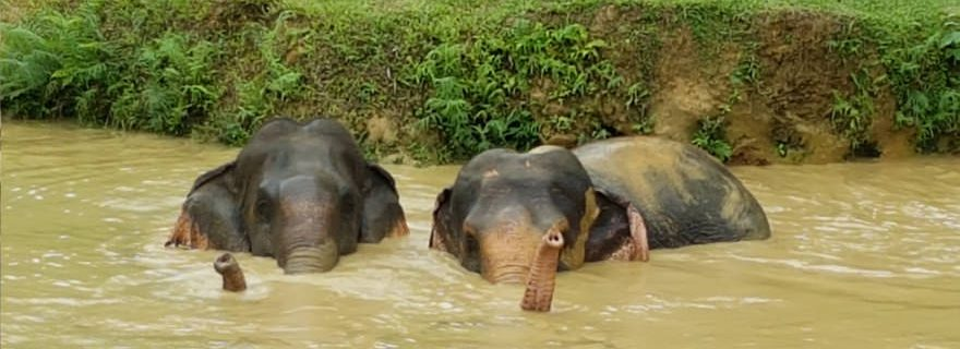 Elefanten baden elephant hill