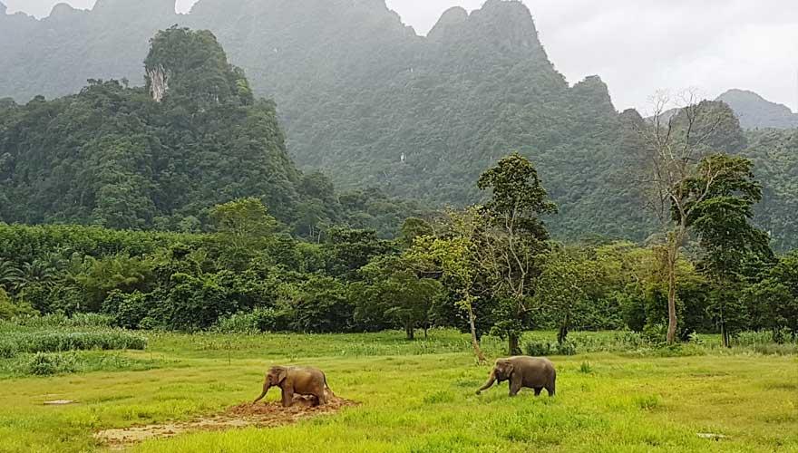 elefanten im elephant hills camps