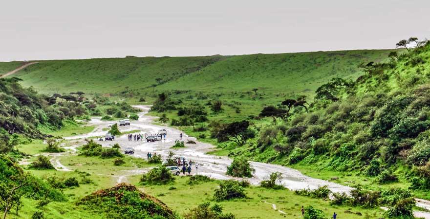 grüne Wiesen in Salalah
