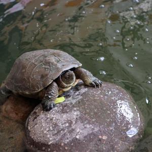 Jardin Secret, Marrakesch, Schildkröte