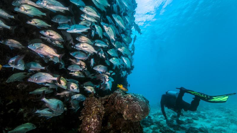 Fischschwarm Bodrum