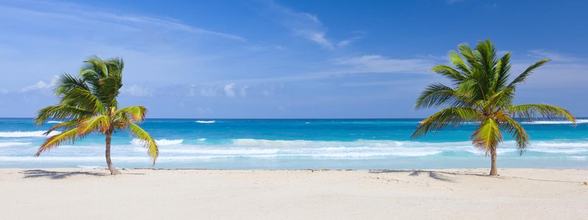 Strand Palmen