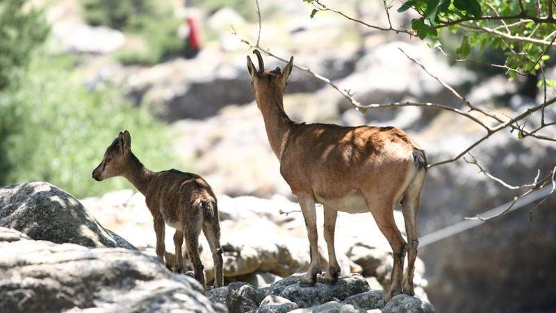 Tiere in Kreta