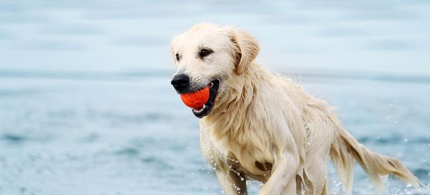 Hund springt auf dem Wasser