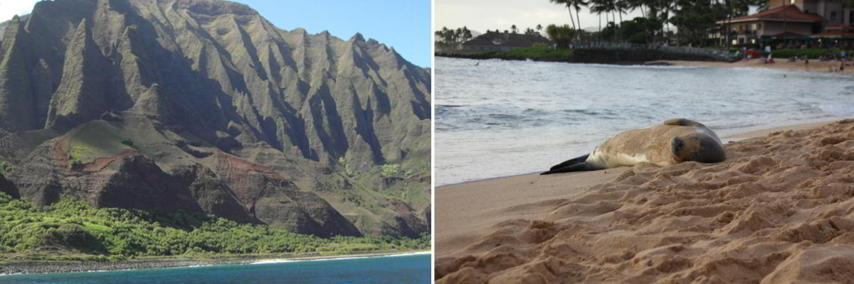 Napali Kauai und Hawaii-Mönchsrobbe am Shipwreck Beach