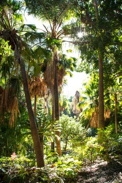Jardin botánico La Concepción, Málaga