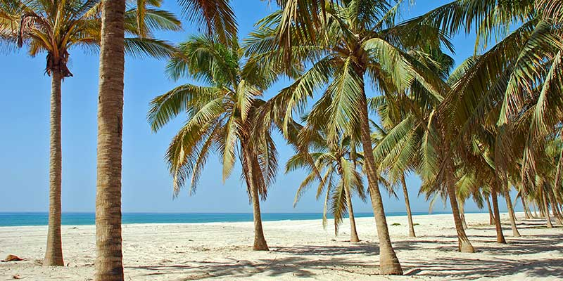Palmenstrand in Salalah