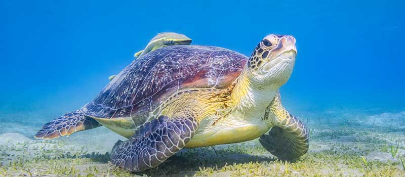 Marsa Alam Tipps Für Urlaub Am Roten Meer Fti Reiseblog