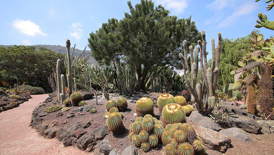 Botanischer Garten, Jardin Botanico Canario Viera y Clavijo