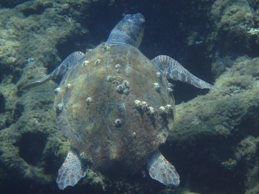 Unterwasser schildkröte auf Rhodos