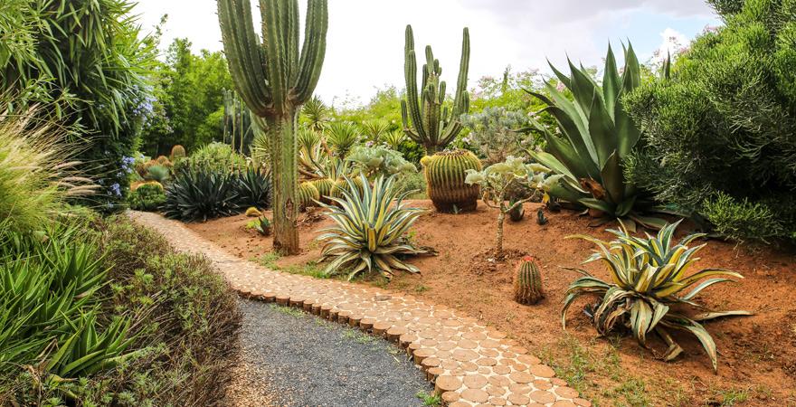 ANIMA Marrakesch, Kaktusgarten