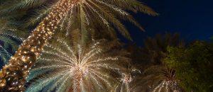 geschmückte Palmen zur Weihnachtszeit