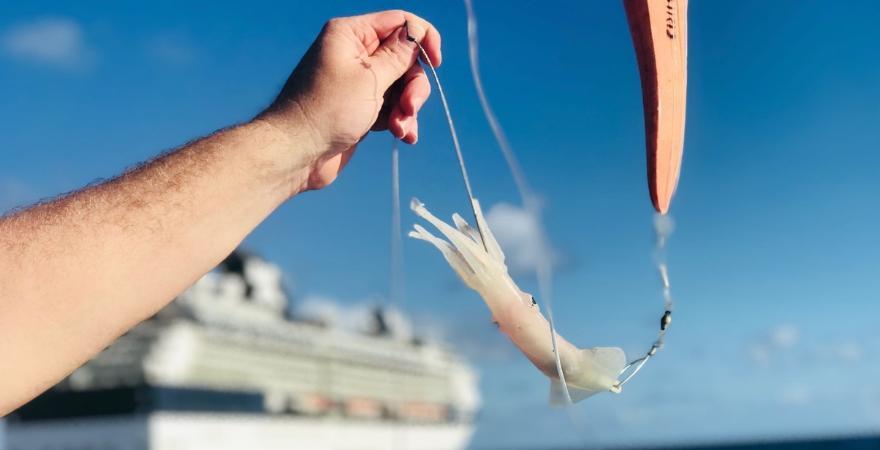 Hochseefischen im karibischen Meer