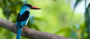 Vogel in Gambia